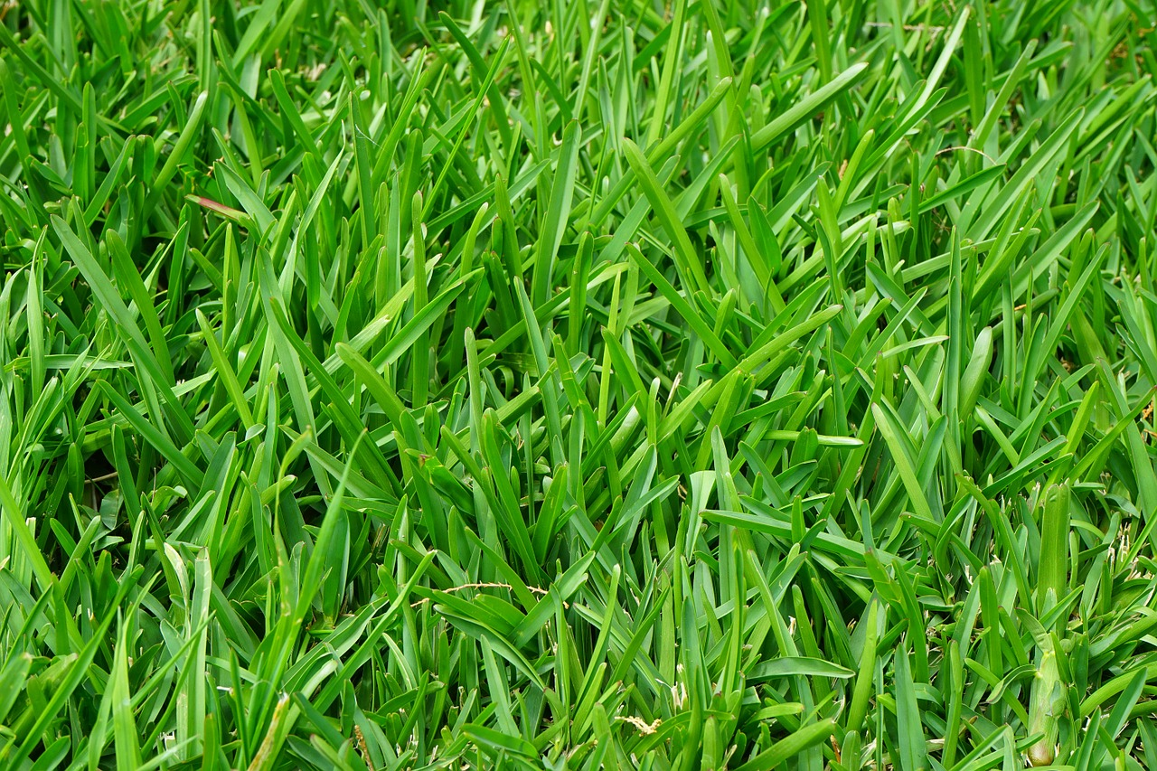 trawy-pylki